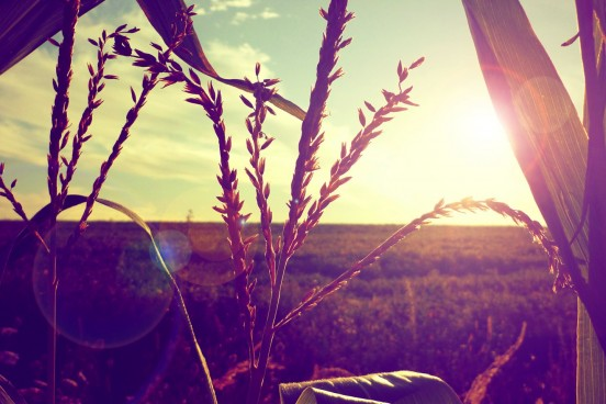 cropped-6996290-nature-field-sunset.jpg